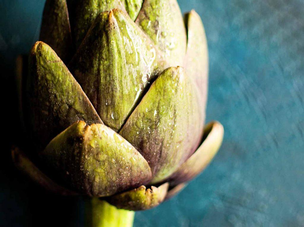 Alcachofa de Tudela, típico ingrediente en recetas de gastronomía navarra y restaurantes de Tudela